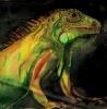 Colorized Green Iguana